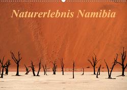 Naturerlebnis Namibia (Wandkalender 2020 DIN A2 quer) von Hawerkamp,  Hans-Wolfgang