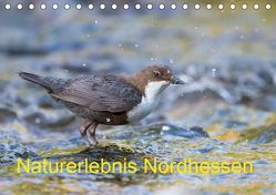 Naturerlebnis Nordhessen (Tischkalender 2019 DIN A5 quer) von Martin (GDT),  Wilfried