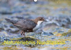 Naturerlebnis Nordhessen (Wandkalender 2019 DIN A3 quer) von Martin (GDT),  Wilfried