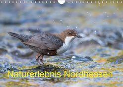 Naturerlebnis Nordhessen (Wandkalender 2019 DIN A4 quer) von Martin (GDT),  Wilfried