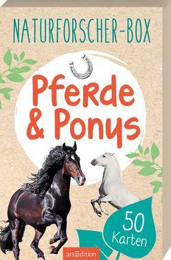 Naturforscher-Box – Pferde & Ponys von Scholz,  Miriam