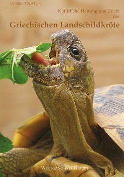 Natürliche Haltung und Zucht der Griechischen Landschildkröte von Wegehaupt,  Wolfgang