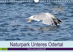 Naturpark Unteres Odertal (Wandkalender 2021 DIN A4 quer) von Widdmann,  Uwe