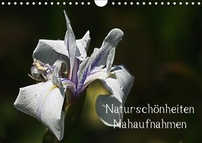 Naturschönheiten – Nahaufnahmen (Wandkalender 2018 DIN A4 quer) von Prediger,  Rosemarie
