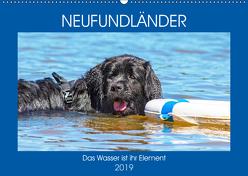 Neufundländer – Das Wasser ist ihr Element (Wandkalender 2019 DIN A2 quer) von Starick,  Sigrid
