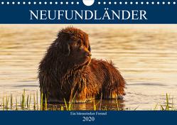 Neufundländer – Ein bärenstarker Freund (Wandkalender 2020 DIN A4 quer) von Starick,  Sigrid