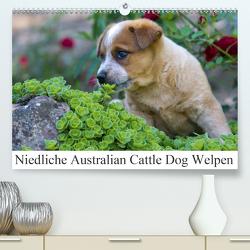 Niedliche Australian Cattle Dog Welpen (Premium, hochwertiger DIN A2 Wandkalender 2020, Kunstdruck in Hochglanz) von Verena Scholze,  Fotodesign