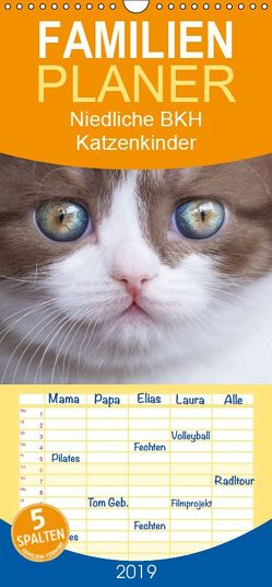 Niedliche BKH Katzenkinder – Familienplaner hoch (Wandkalender 2019 , 21 cm x 45 cm, hoch) von Bürger,  Janina