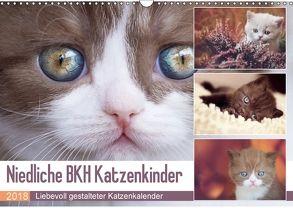 Niedliche BKH Katzenkinder (Wandkalender 2018 DIN A3 quer) von Bürger,  Janina