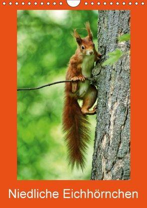 Niedliche Eichhörnchen (Wandkalender 2018 DIN A4 hoch) von kattobello
