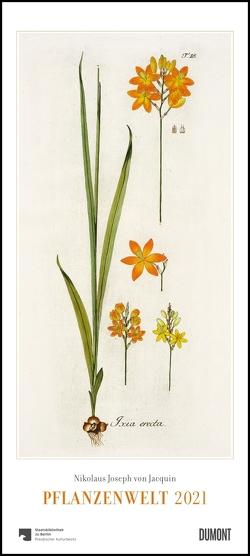 Nikolaus Joseph von Jacquin: Pflanzenwelt 2021 ‒ Wandkalender mit botanischen Zeichnungen ‒ Hoch-Format 22 x 49,5 cm von Jacquin,  Nikolaus Joseph von
