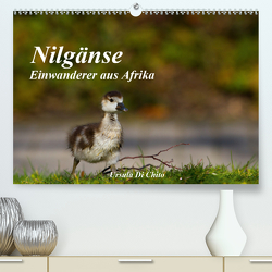 Nilgänse – Einwanderer aus Afrika (Premium, hochwertiger DIN A2 Wandkalender 2021, Kunstdruck in Hochglanz) von Di Chito,  Ursula