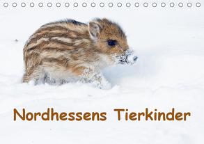 Nordhessens Tierkinder (Tischkalender 2019 DIN A5 quer) von Martin,  Wilfried