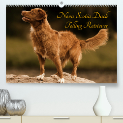 Nova Scotia Duck Tolling Retriever (Premium, hochwertiger DIN A2 Wandkalender 2020, Kunstdruck in Hochglanz) von Müller Hundefotowerk,  Beatrice