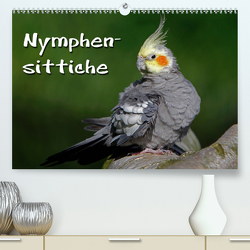 Nymphensittiche (Premium, hochwertiger DIN A2 Wandkalender 2020, Kunstdruck in Hochglanz) von Berg,  Martina