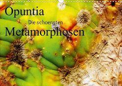Opuntia die schoensten Metamorphosen (Posterbuch DIN A3 quer) von AnBe,  by