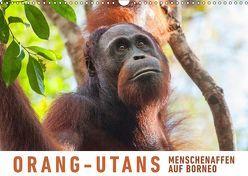 Orang-Utans Menschenaffen auf Borneo (Wandkalender 2019 DIN A3 quer) von Ristl,  Martin