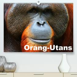 Orang-Utans (Premium, hochwertiger DIN A2 Wandkalender 2021, Kunstdruck in Hochglanz) von Stanzer,  Elisabeth