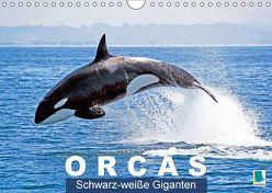 Orcas: Schwarz-weiße Giganten (Wandkalender 2018 DIN A4 quer) von CALVENDO,  k.A.