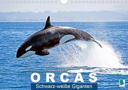 Orcas: Schwarz-weiße Giganten (Wandkalender 2020 DIN A4 quer) von CALVENDO