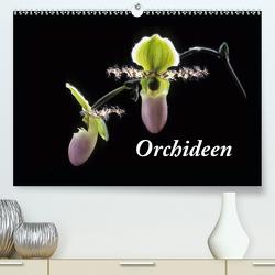 Orchideen 2020 (Premium, hochwertiger DIN A2 Wandkalender 2020, Kunstdruck in Hochglanz) von kleber©gagelart