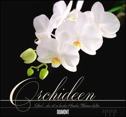 Orchideen 2022 – DUMONT Wandkalender – mit den wichtigsten Feiertagen – Format 38,0 x 35,5 cm von Haak,  Rainer