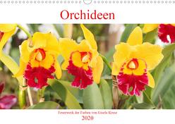 Orchideen Feuerwerk der Farben (Wandkalender 2020 DIN A3 quer) von Kruse,  Gisela
