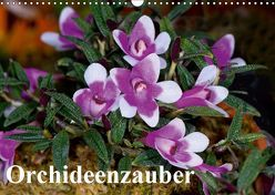 Orchideenzauber (Wandkalender 2019 DIN A3 quer)