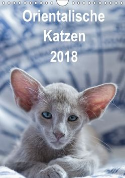 Orientalische Katzen 2018 (Wandkalender 2018 DIN A4 hoch) von Bollich,  Heidi
