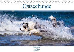 Ostseehunde (Tischkalender 2019 DIN A5 quer) von Langer,  Jill
