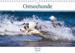Ostseehunde (Wandkalender 2019 DIN A4 quer) von Langer,  Jill