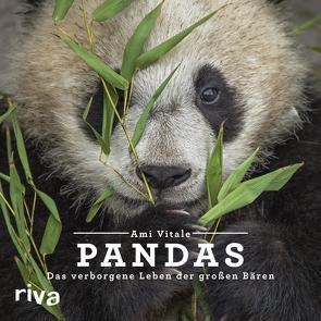 Pandas von Vitale,  Ami