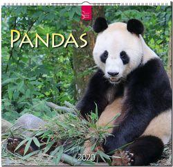 Pandas von Redaktion Verlagshaus Würzburg,  Bildagentur