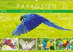 Papageien: Farbenpracht im Flug (Wandkalender 2019 DIN A2 quer) von CALVENDO