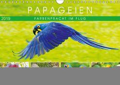 Papageien: Farbenpracht im Flug (Wandkalender 2019 DIN A4 quer) von CALVENDO