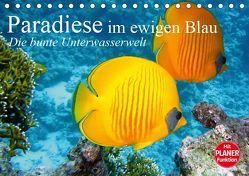 Paradiese im ewigen Blau. Die bunte Unterwasserwelt (Tischkalender 2019 DIN A5 quer) von Stanzer,  Elisabeth
