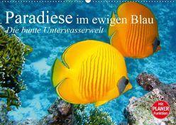 Paradiese im ewigen Blau. Die bunte Unterwasserwelt (Wandkalender 2019 DIN A2 quer) von Stanzer,  Elisabeth