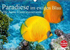 Paradiese im ewigen Blau. Die bunte Unterwasserwelt (Wandkalender 2019 DIN A3 quer) von Stanzer,  Elisabeth
