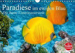 Paradiese im ewigen Blau. Die bunte Unterwasserwelt (Wandkalender 2019 DIN A4 quer) von Stanzer,  Elisabeth