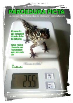 PAROEDURA PICTA – Großkopfgeckos von Dark,  Angy