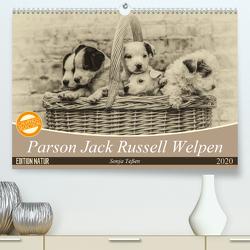 Parson Jack Russel Welpen (Premium, hochwertiger DIN A2 Wandkalender 2020, Kunstdruck in Hochglanz) von Teßen,  Sonja