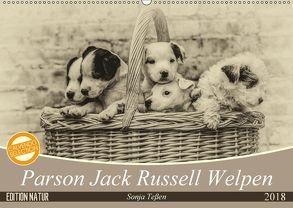 Parson Jack Russel Welpen (Wandkalender 2018 DIN A2 quer) von Teßen,  Sonja