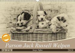 Parson Jack Russel Welpen (Wandkalender 2019 DIN A3 quer) von Teßen,  Sonja