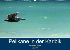 Pelikane in der Karibik – Die vielfältige Tierwelt (Wandkalender 2019 DIN A2 quer) von Hornecker -www.fotosdelmundo.de, - Frank