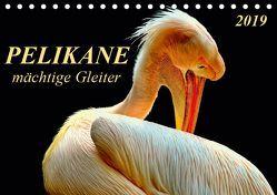 Pelikane – mächtige Gleiter (Tischkalender 2019 DIN A5 quer) von Roder,  Peter