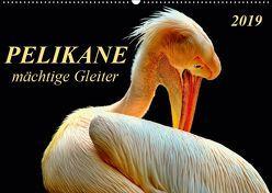 Pelikane – mächtige Gleiter (Wandkalender 2019 DIN A2 quer) von Roder,  Peter