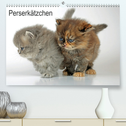 Perserkätzchen(Premium, hochwertiger DIN A2 Wandkalender 2020, Kunstdruck in Hochglanz) von Eppele,  Klaus