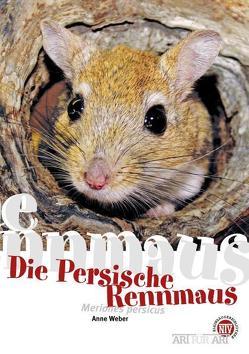 Persische Rennmaus von Anne,  Weber