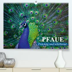 Pfaue. Prächtig und schillernd (Premium, hochwertiger DIN A2 Wandkalender 2021, Kunstdruck in Hochglanz) von Stanzer,  Elisabeth