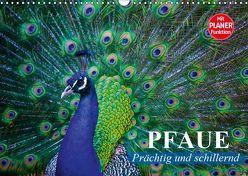 Pfaue. Prächtig und schillernd (Wandkalender 2019 DIN A3 quer) von Stanzer,  Elisabeth